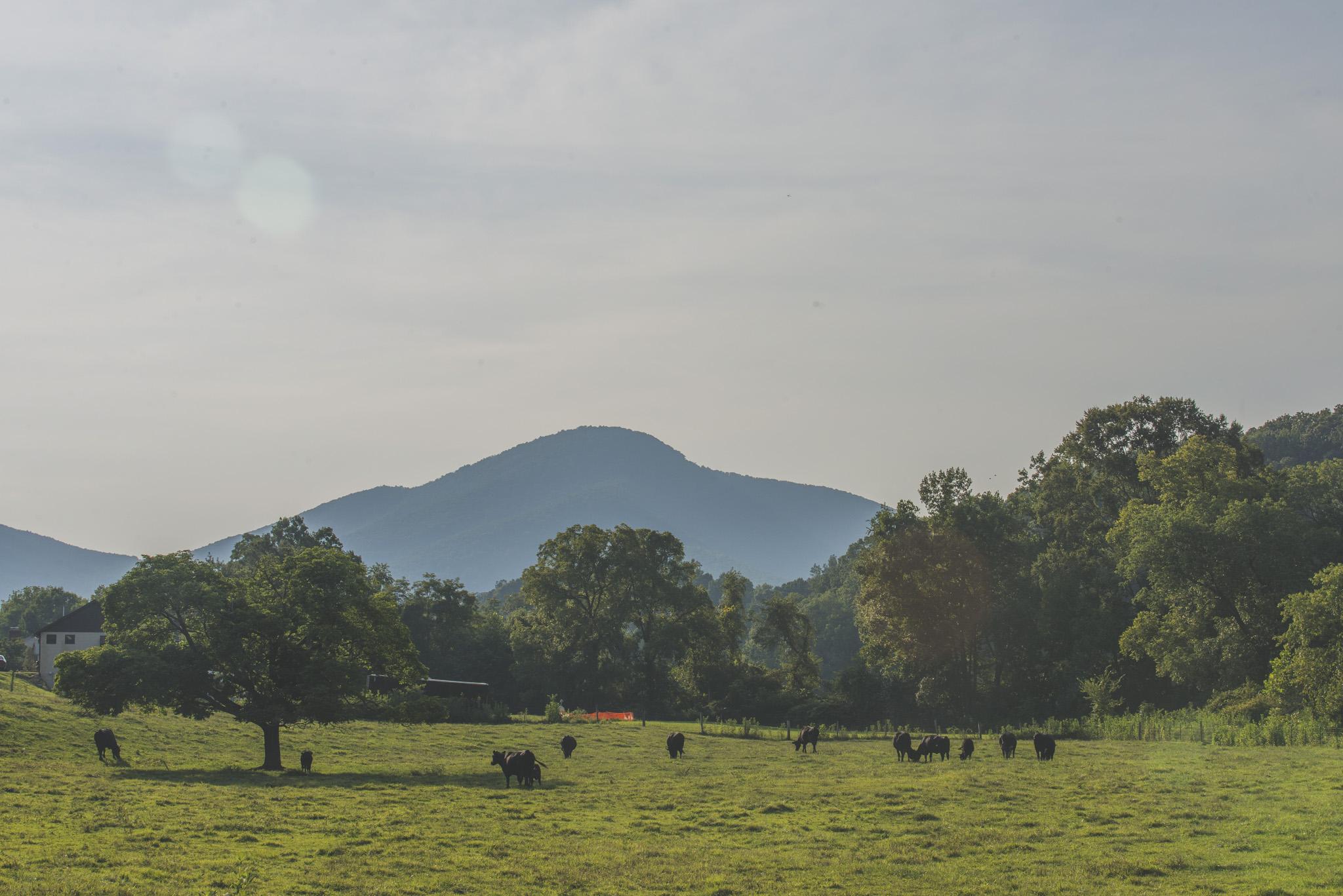 SeniorSession_BigIsland_VA_Lynchburg_farm_huntingdog20150805_0278.jpg