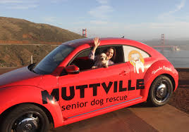 Sherry from Muttville, the best dog rescue in San Francisco