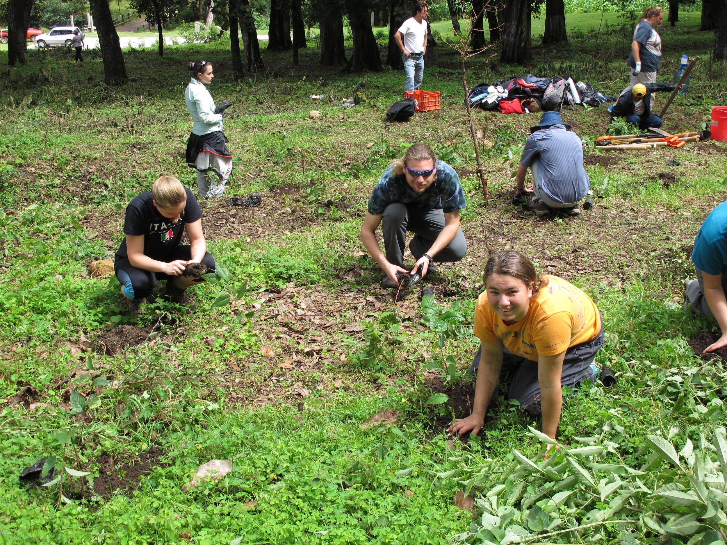 Junior Friends during the reforestation work