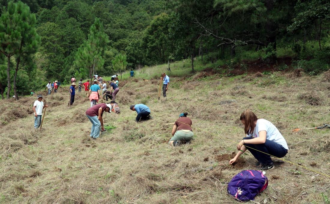 Planting trees at Xejuyú