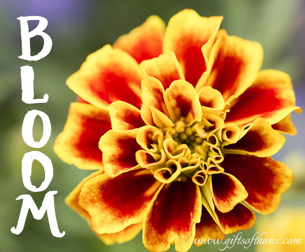 bloom-flower.jpg