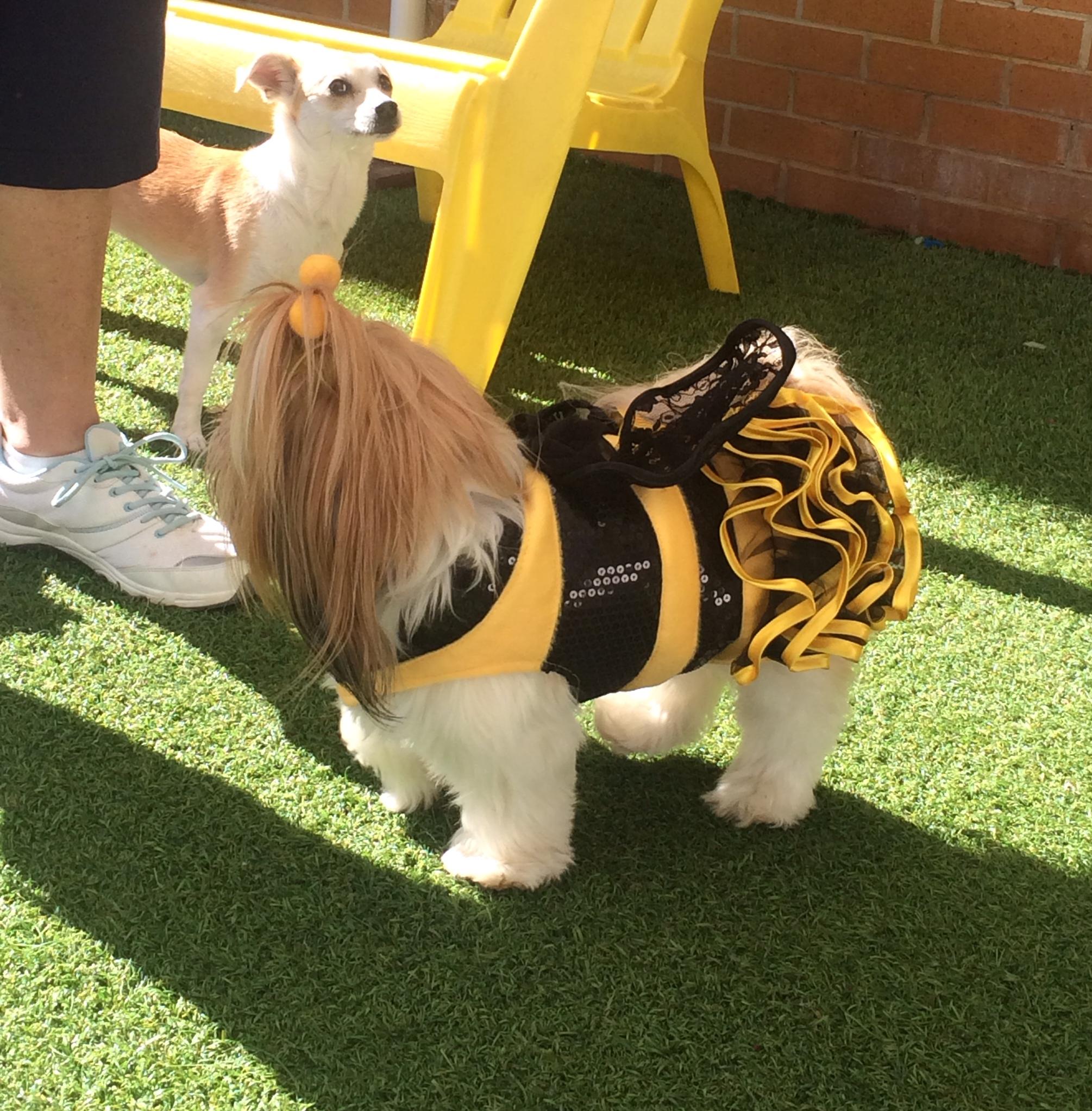 DaisyV the Bee.JPG