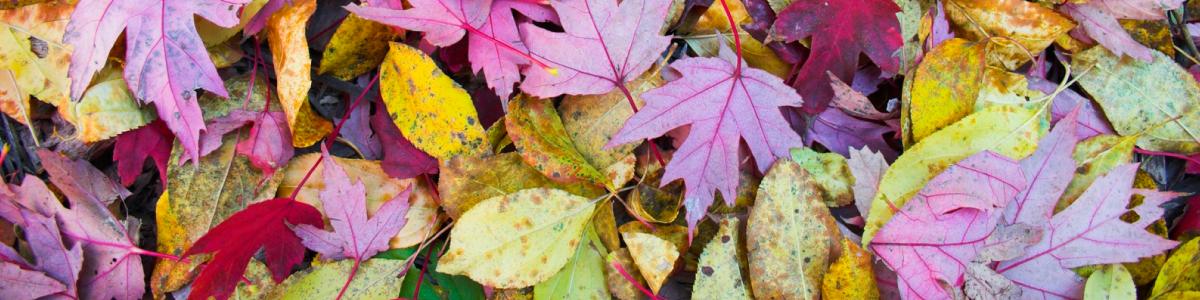 fall colors cava.png
