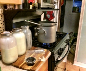 STAGE 1:  Heating the Goat milk