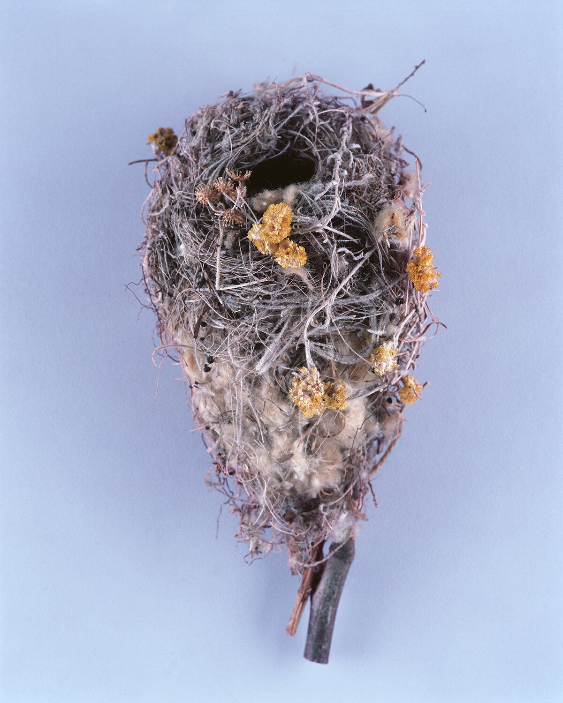 BIRDS-NESTS010.jpg