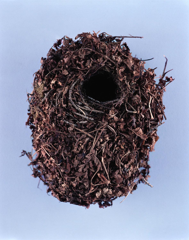 BIRDS-NESTS015.jpg