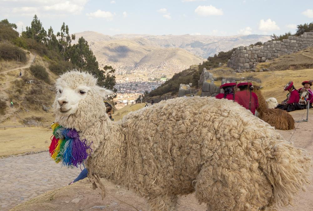 080116_Peru_0172.jpg