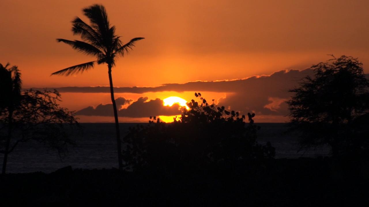 Sunset Palm Tree.jpg