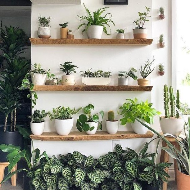 Claim your walls and make them awesome! There is so much space just waiting for you if you look vertically. We can help. Just click the link in our profile. . . Photo by: @myrandao . #openshelving #radshelfie #shelfbrackets #shelves #shelfie #floatingshelves #openshelves #floating #floatinghardware #customshelves #shelvesdesign #cleandesign #finditstyleit #woodshelves #kitchenshelves #loveyourhabitat #interiordesign #roomhints #kitchensofinstagram #homeimprovement #radshelves #strongfloatingshelves #heavyduty #hiddenhardware #woodworking #floatingdesk #floatingbookshelves #openshelfie #floatingmantel #thinshelves