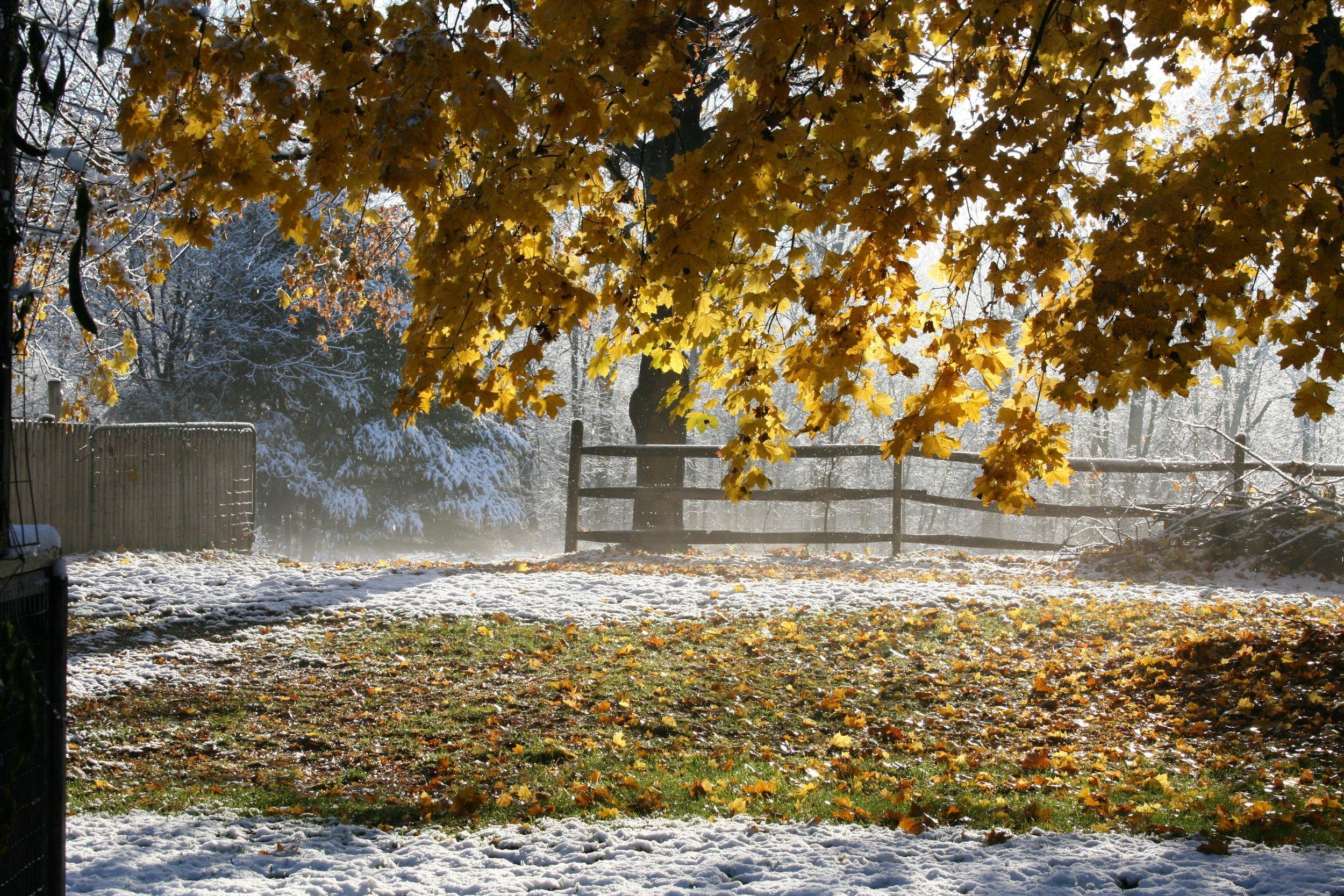 Autumn snow.jpg