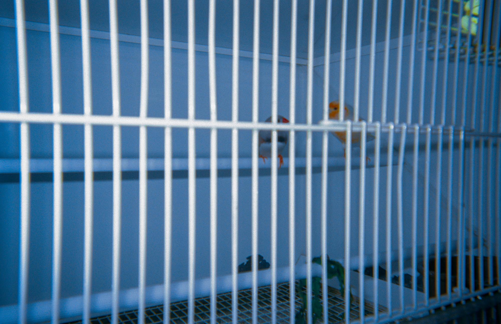 Caged Faith II
