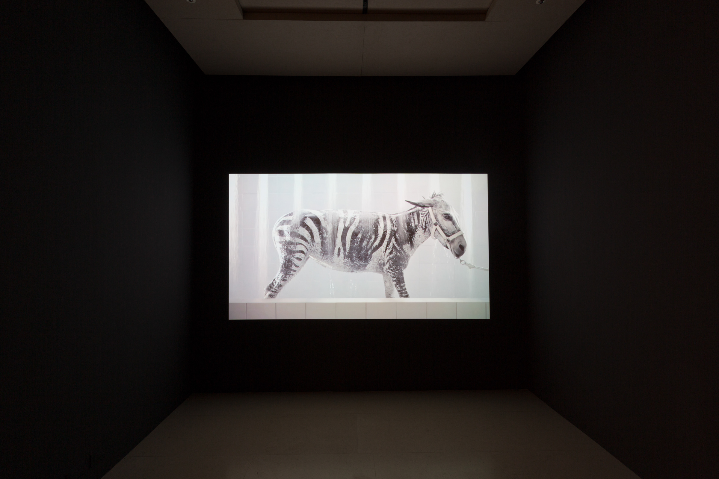 Sharif Waked, Gaza Zoo I (Bath Time), 2012, video