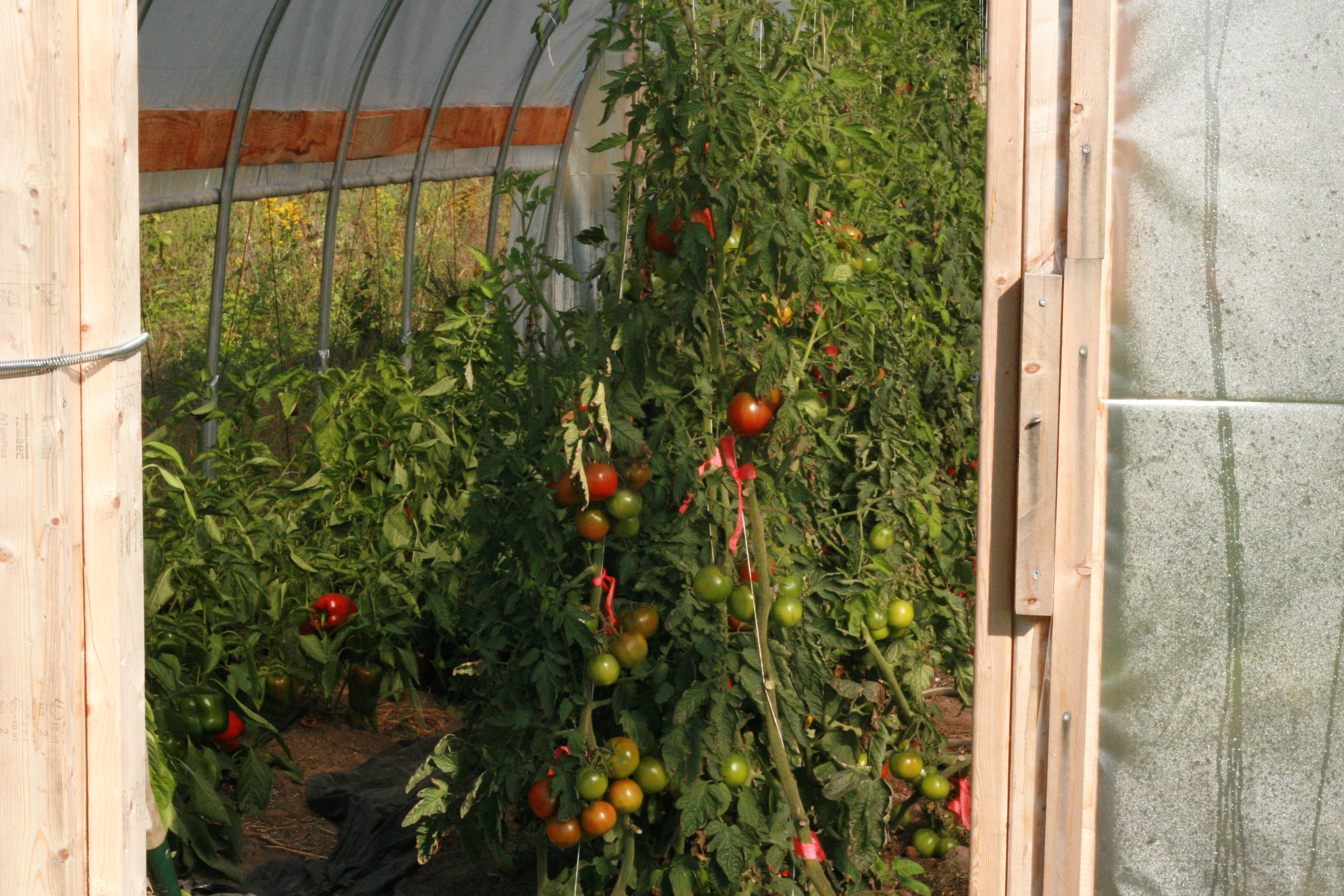Tomatoes and sweet peppers