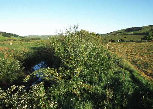 Riparian buffer in pasture