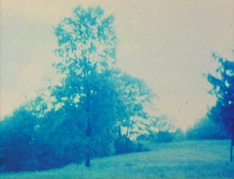 37/78 TREE AGAIN