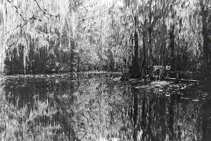 Abstract view of trees and water in the swamps