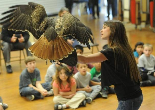 Lead educator Jaclyn DeSantis and Red-tailed Hawk ambassador Rosie