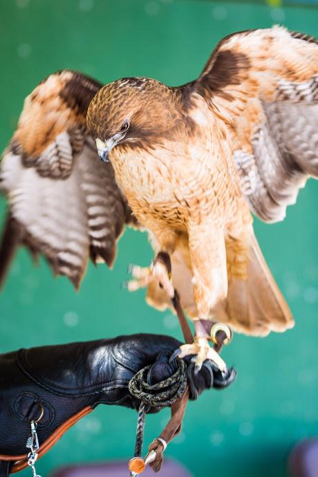 Ojai Raptor Center photos-142.JPG