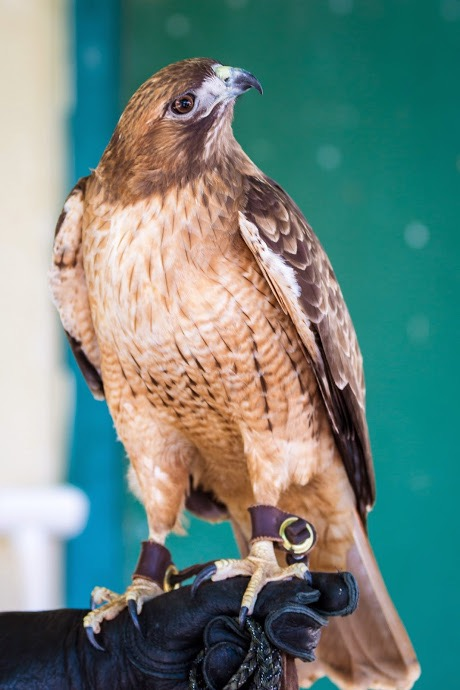 Ojai Raptor Center photos-144.jpg