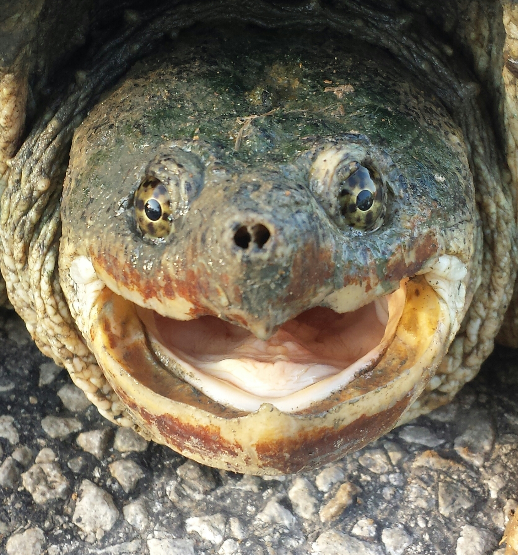 I love it when the turtles laugh.