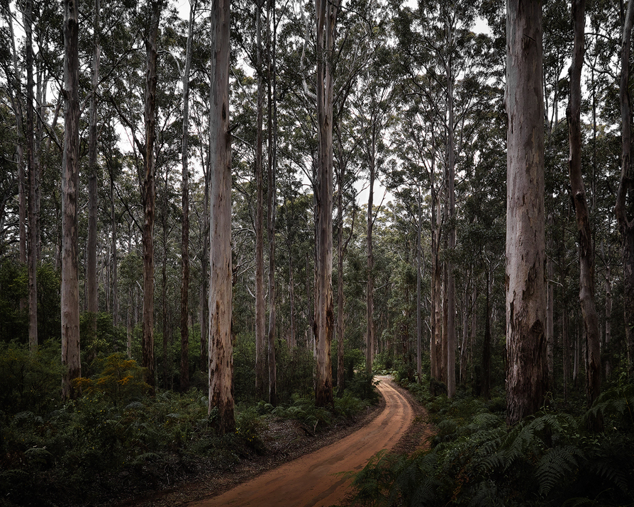 Boranup Forest with its towering trees is another must-see.