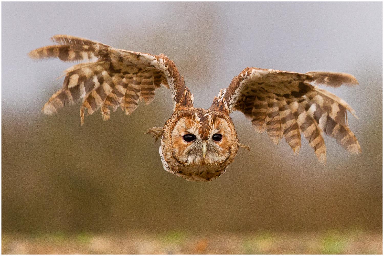 Owl from the Mist.jpg