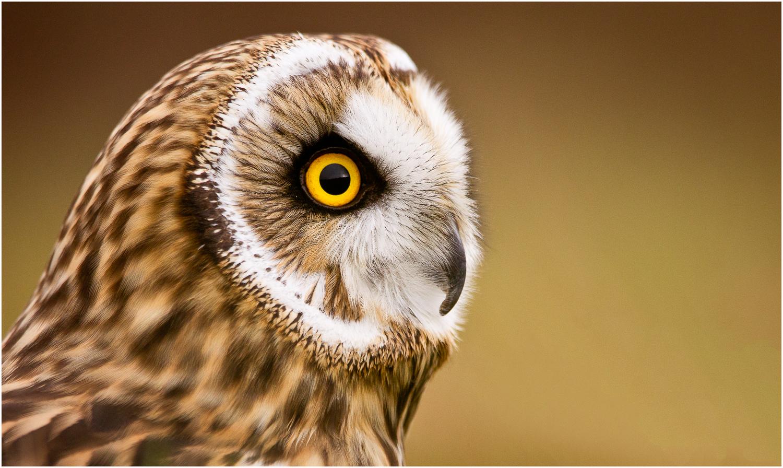 Owl in Profile.jpg