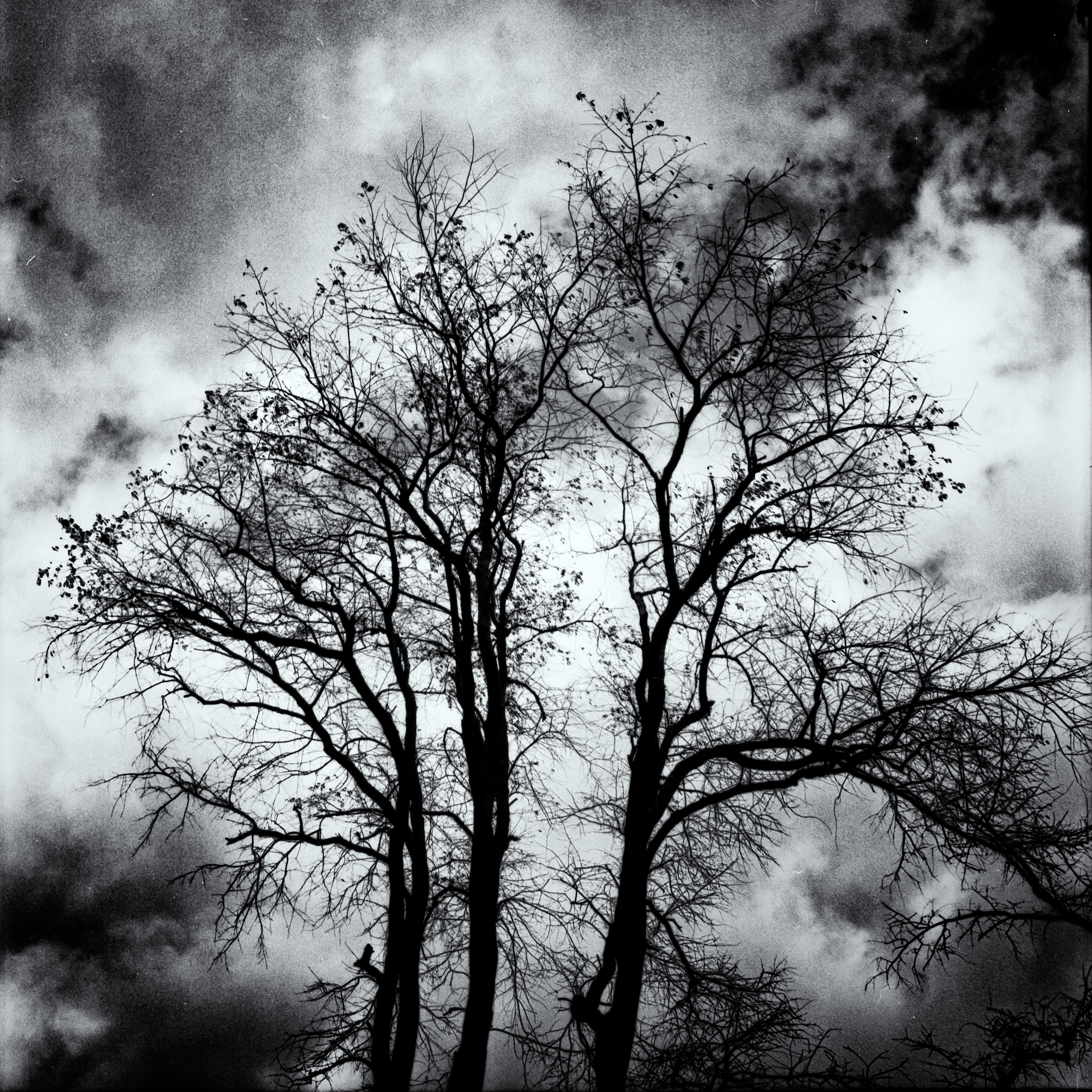 Dravo Cemetery: Trees and Clouds