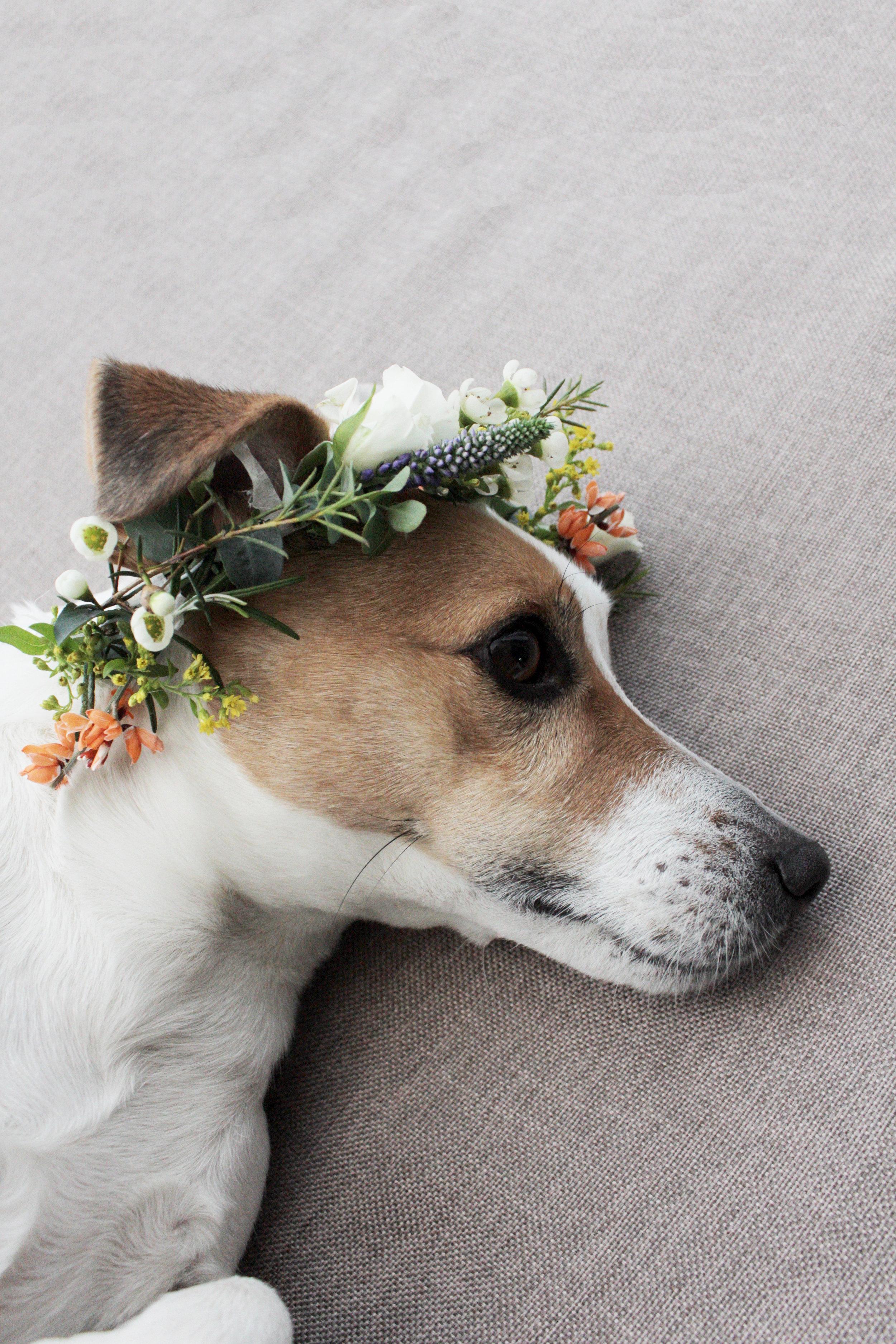 flower crown tutorial by www.hestershandamdehome.com