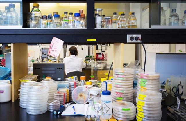 Photo by Justin Wonnacott of Annie Thibault working in the biology lab at Carleton University