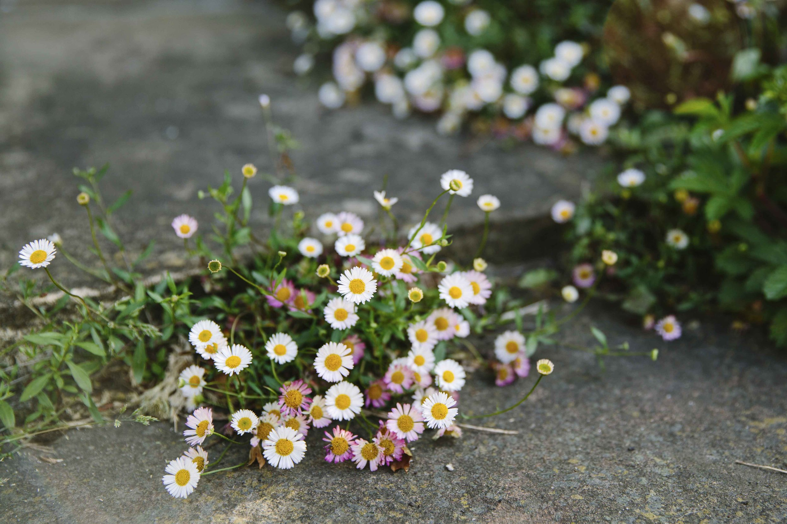 Yorkshire_Dales_Flower_Company_42.jpg