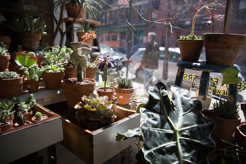 Spring at Green Fingers in the East Village.