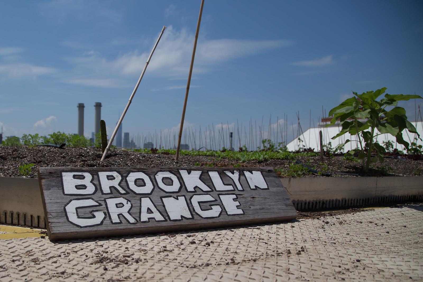 brooklyn_grange-58.jpg