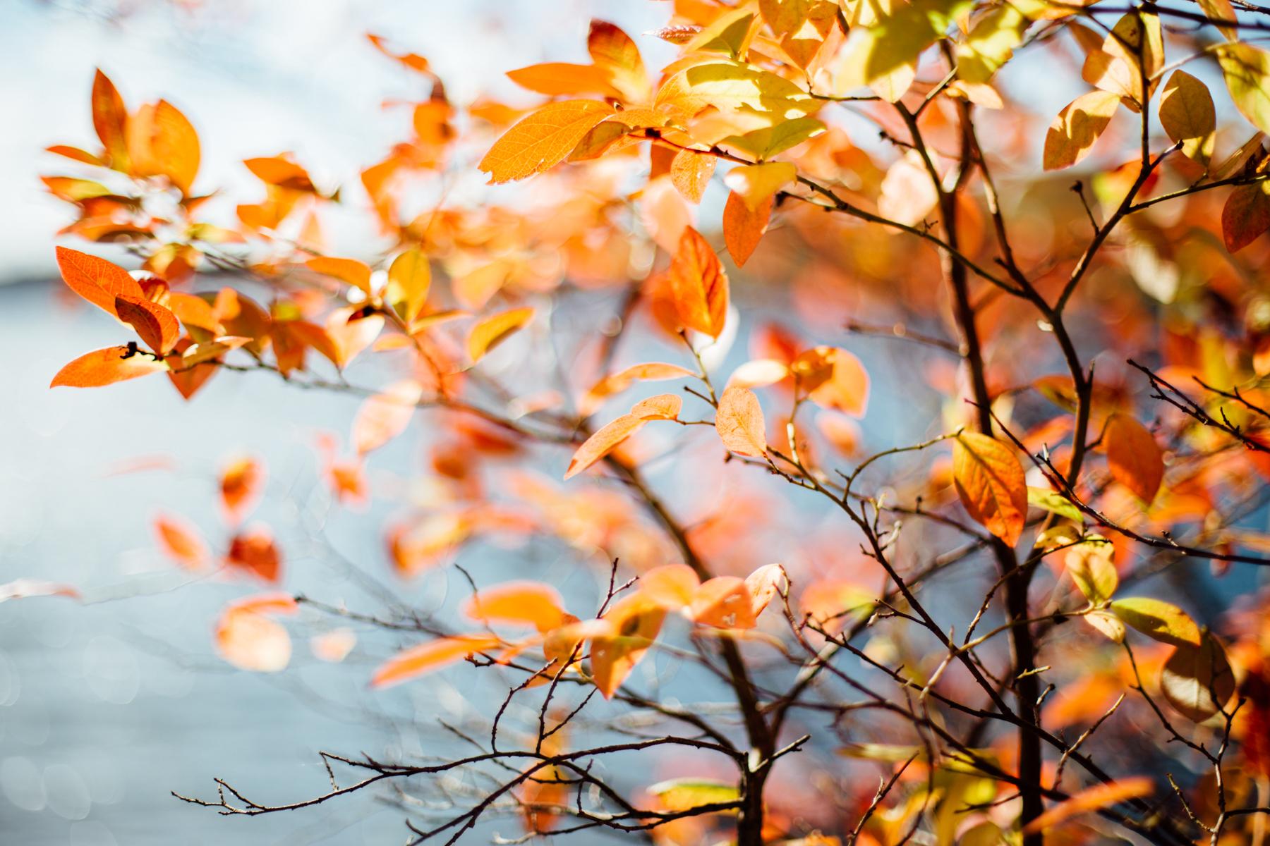 harriman-state-park-fall-9174.jpg