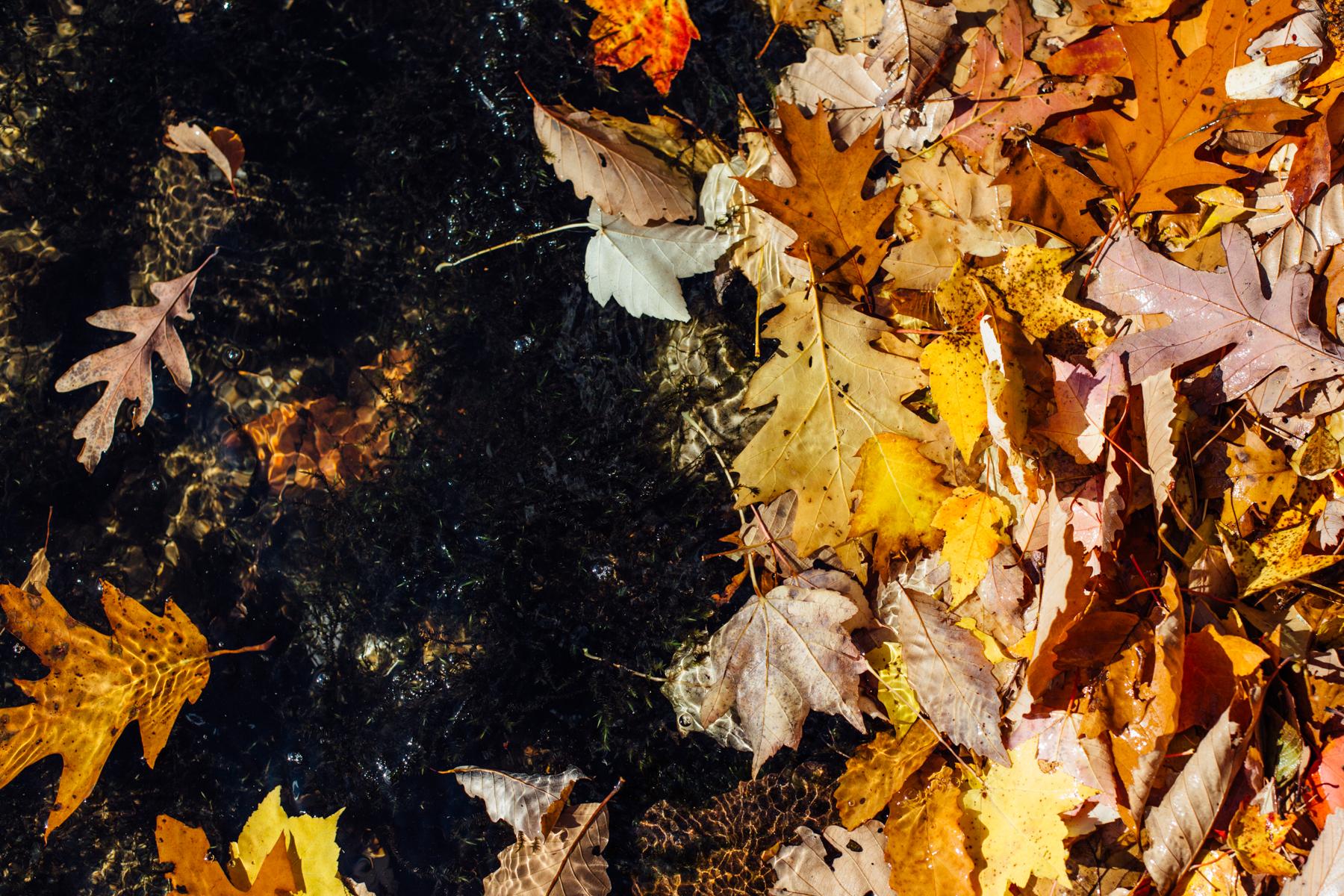 harriman-state-park-fall-9177.jpg