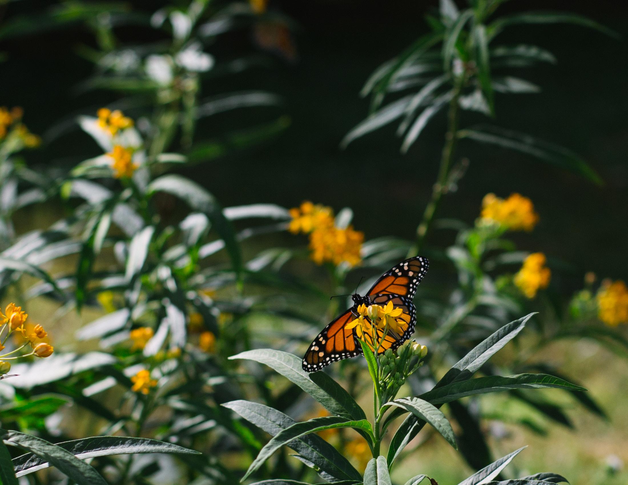 brooklyn-botanic-2722.jpg