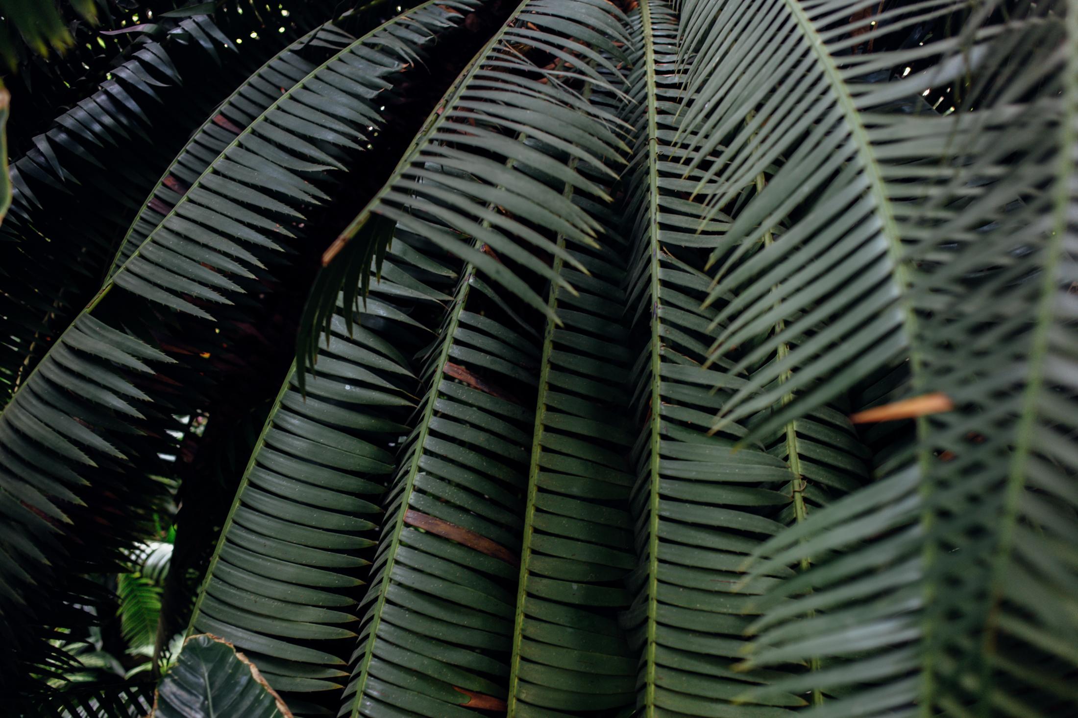brooklyn-botanic-2685.jpg