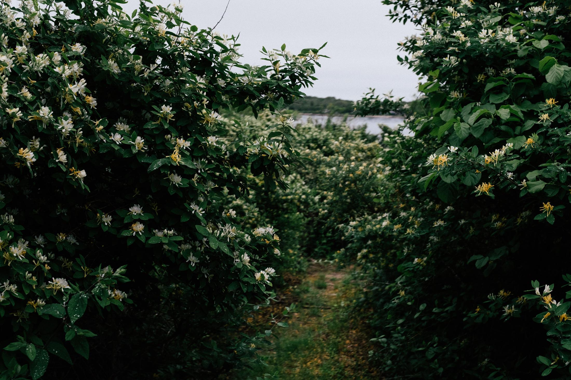 fujifilm_x100f-6654.jpg