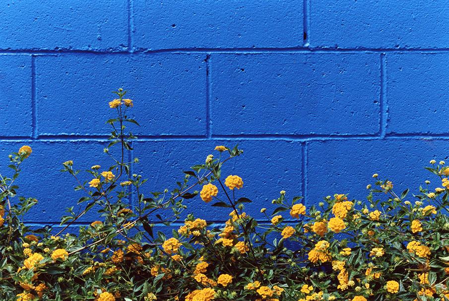 this is blue 001.jpg