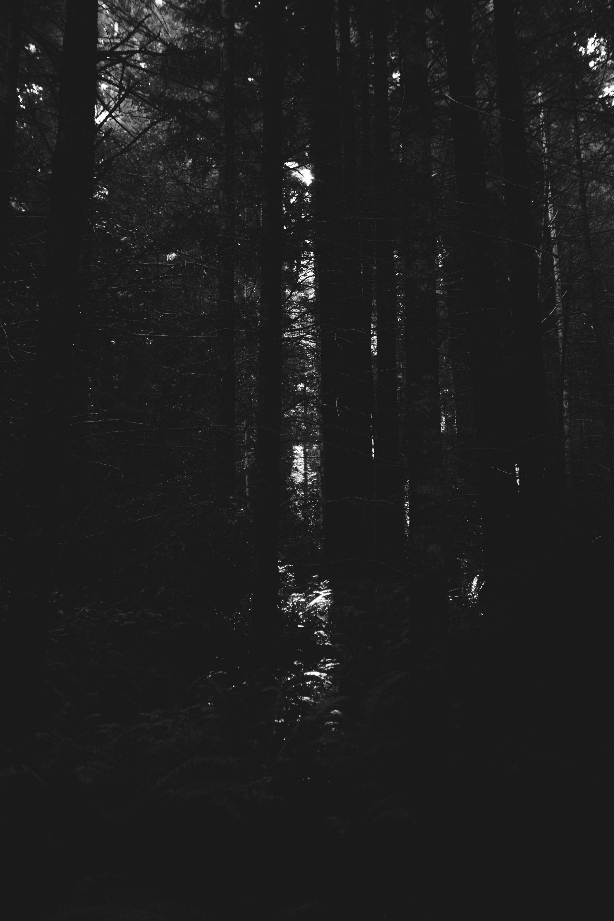 Highway One Redwoods
