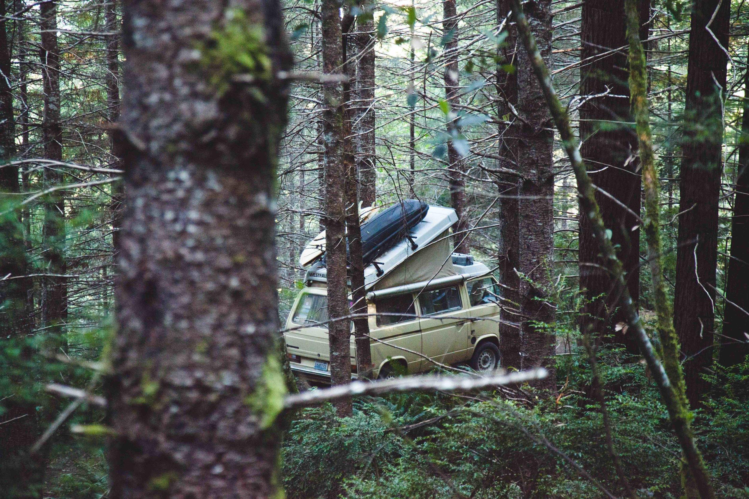 Redwoods Westfalia