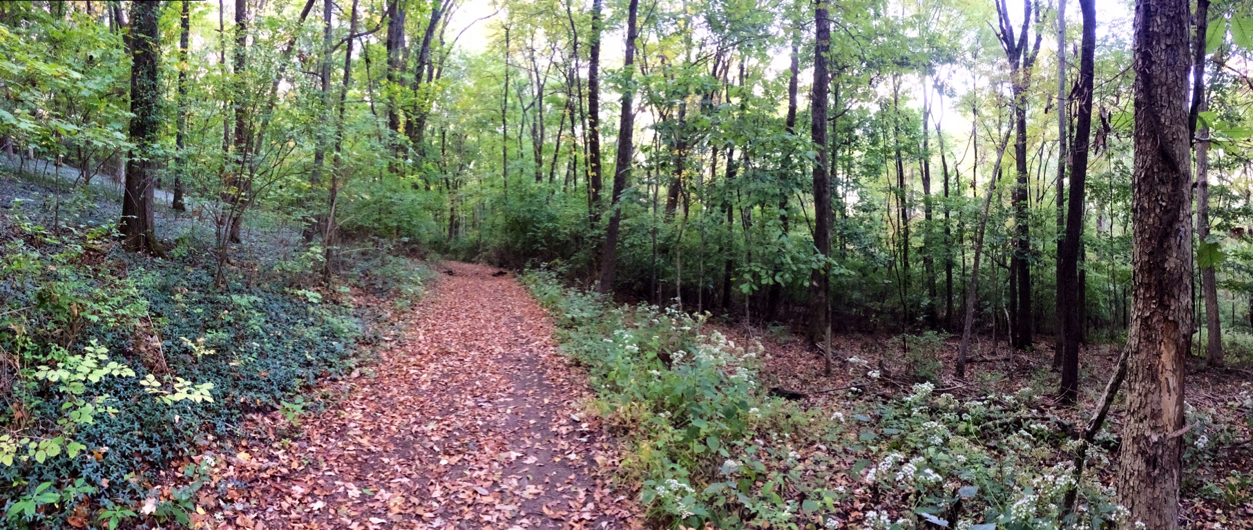 Percy Warner trails are a great place to get some miles in.