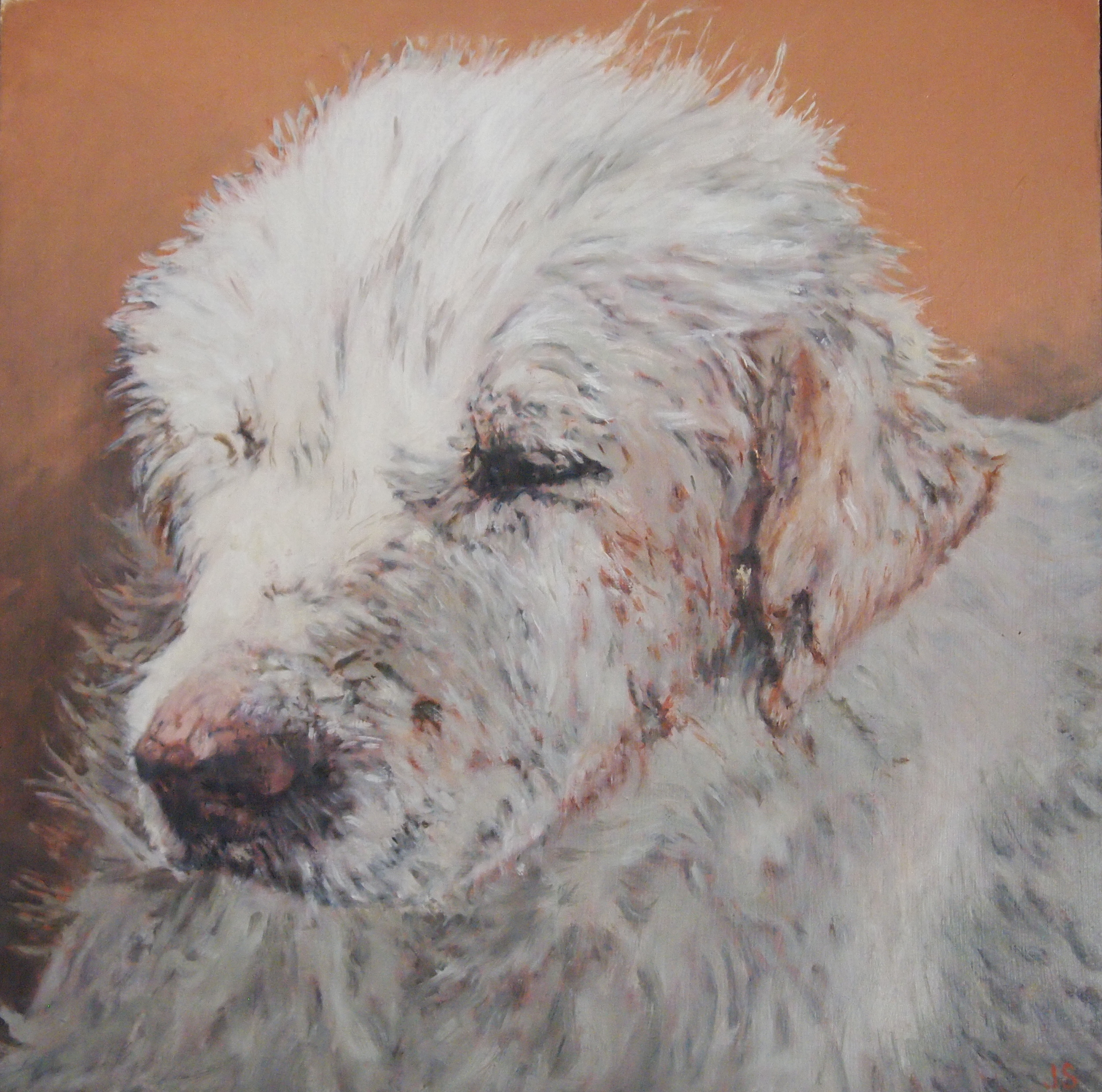 Portrait of a Dog in Egypt