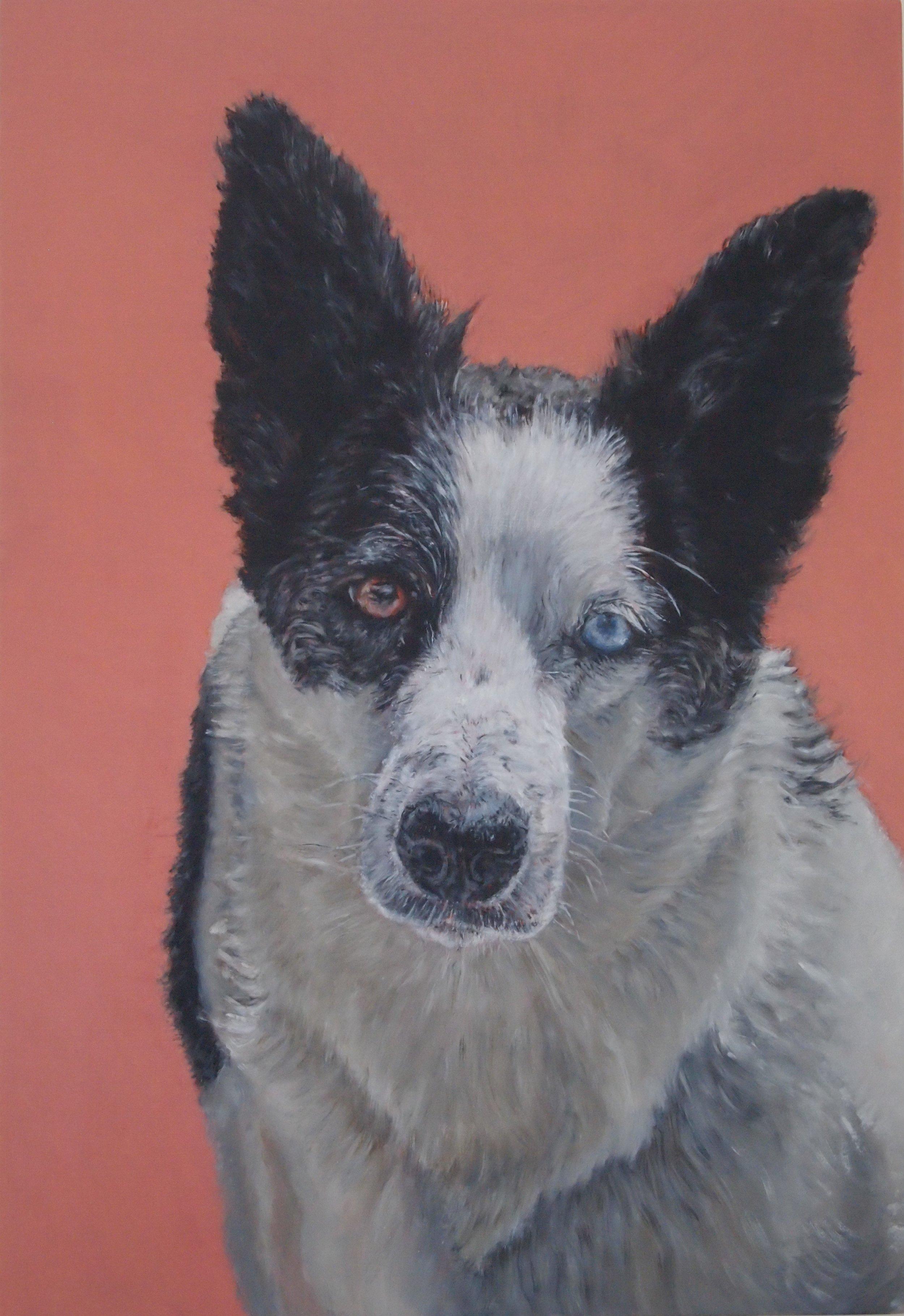 Dog in Trinidad Colorado