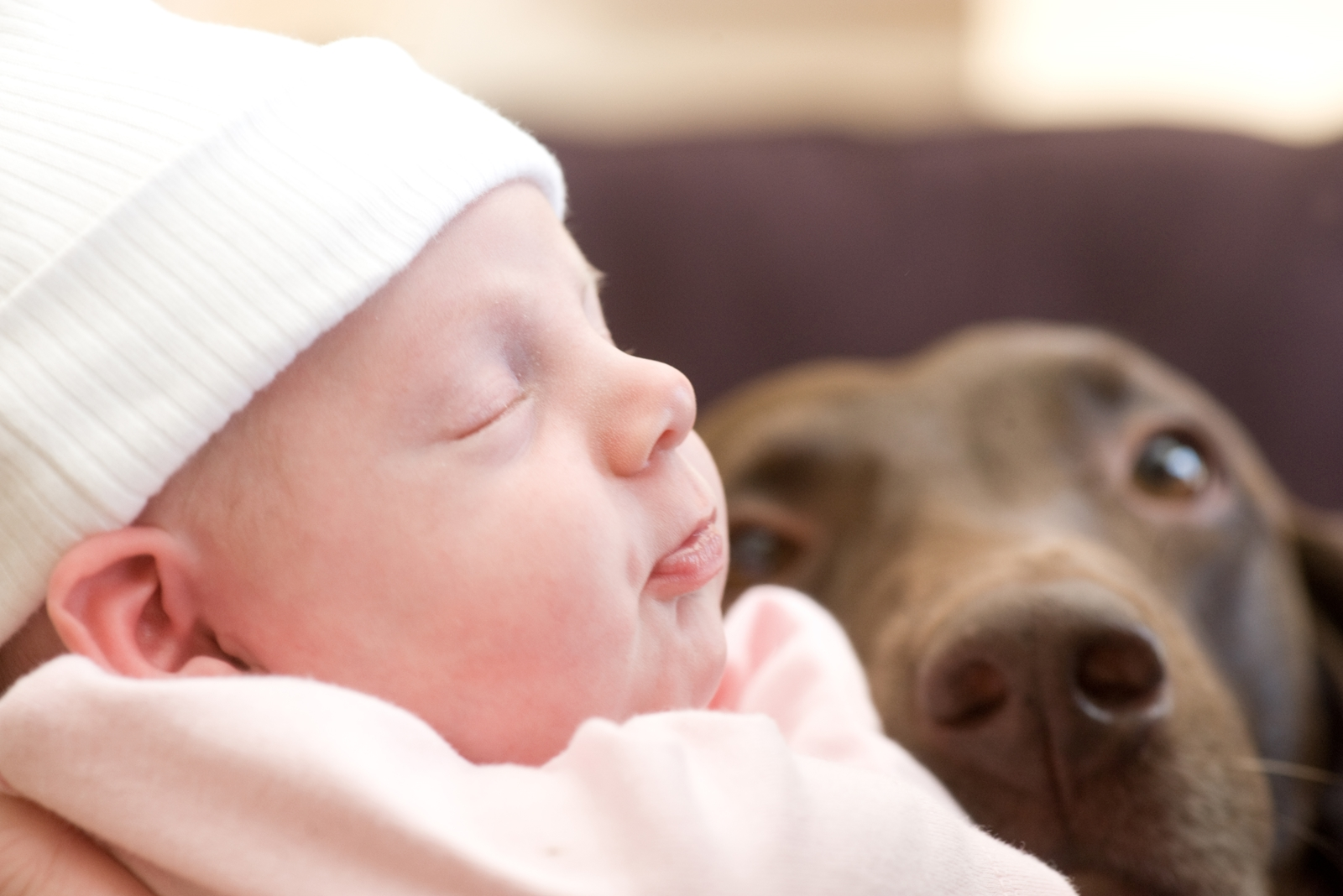 Baby and Chocolate Lab