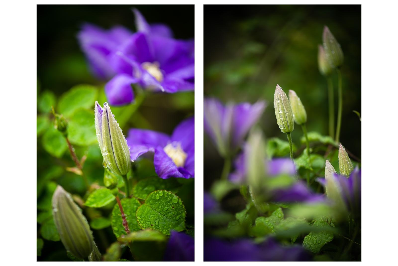 Morning Garden 01