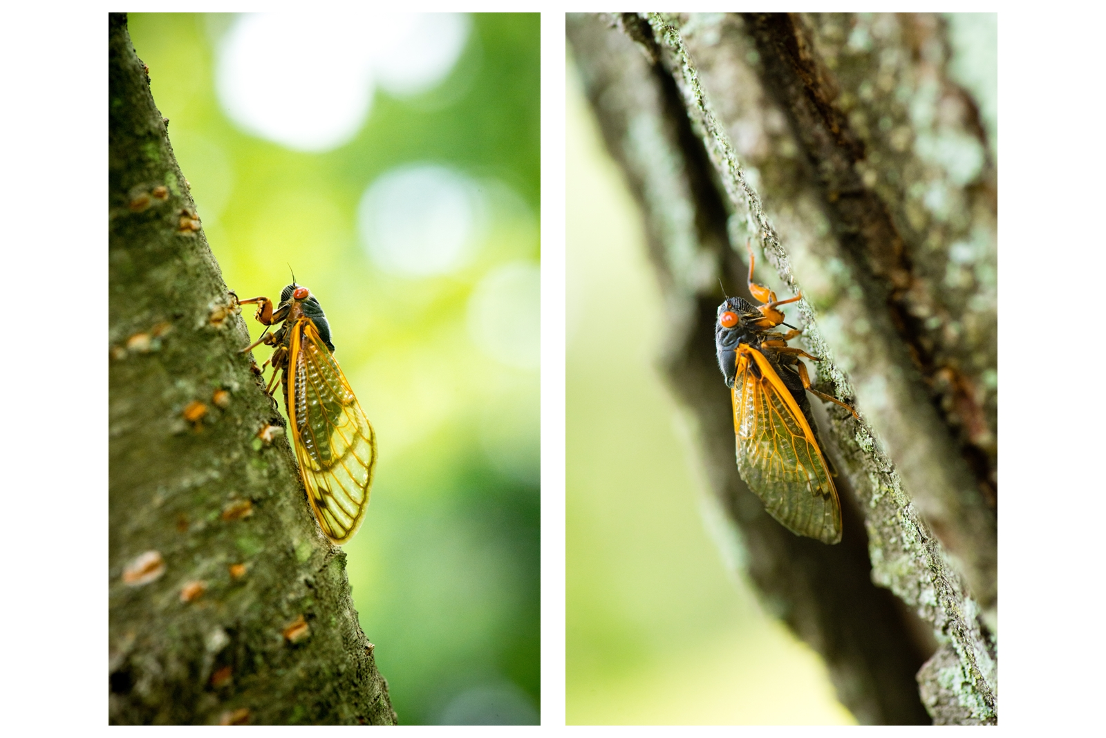 Nature-040.jpg
