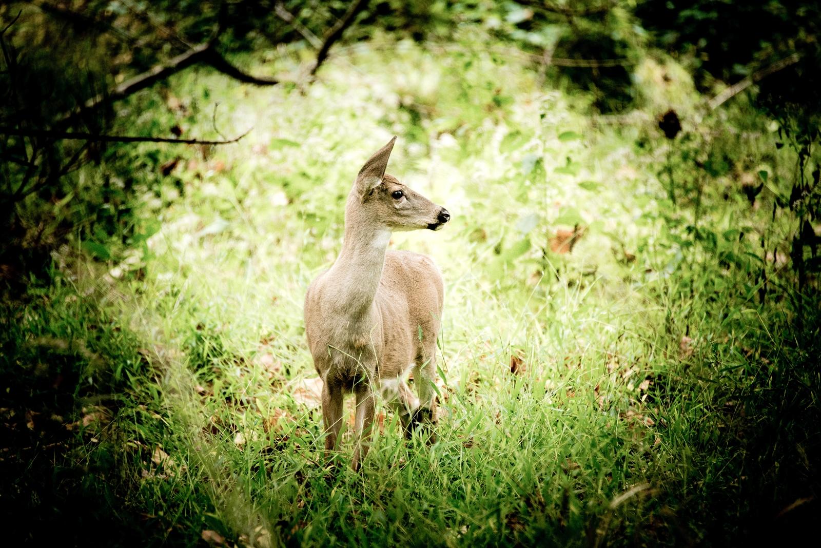 Nature-059.jpg
