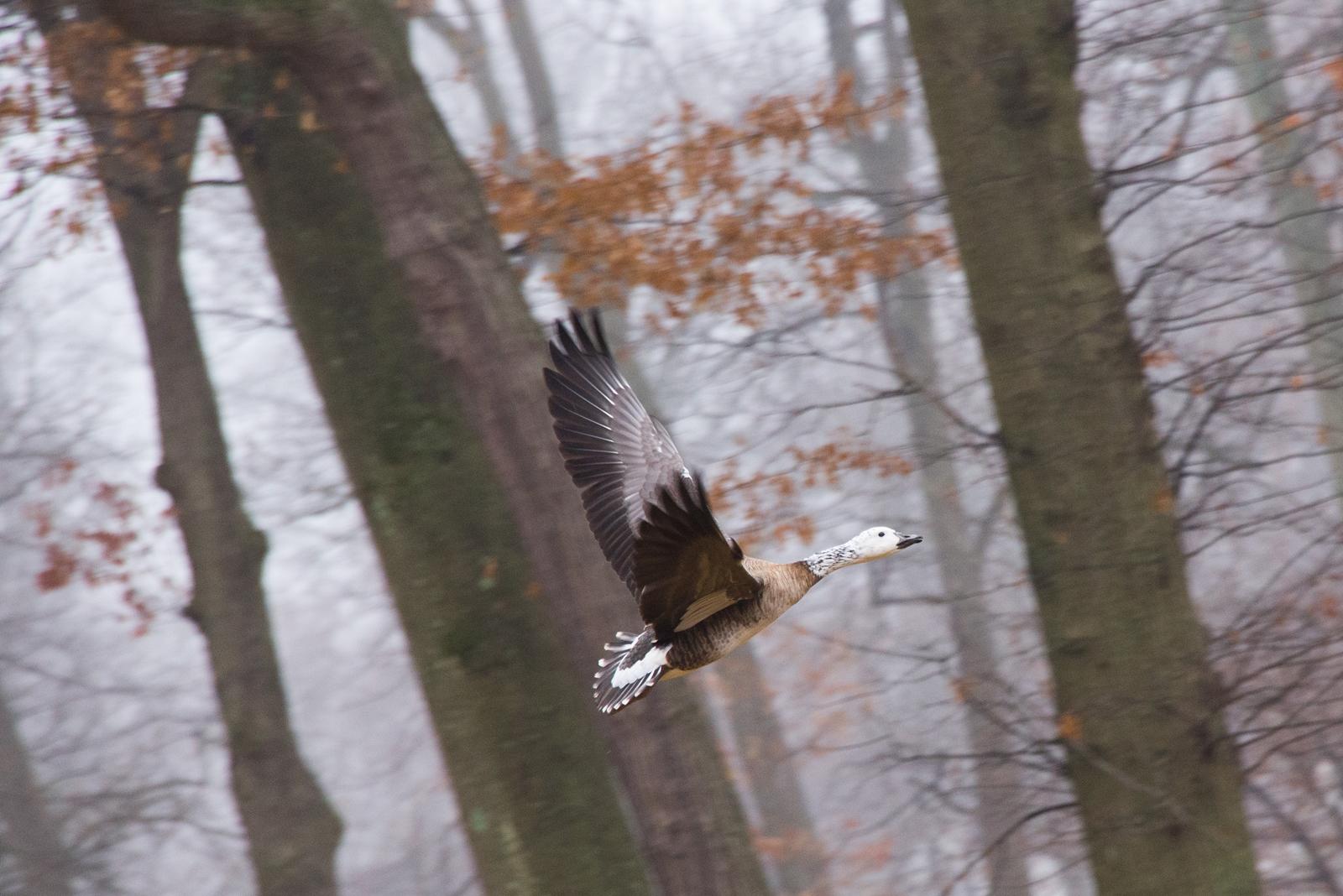 Nature-072.jpg