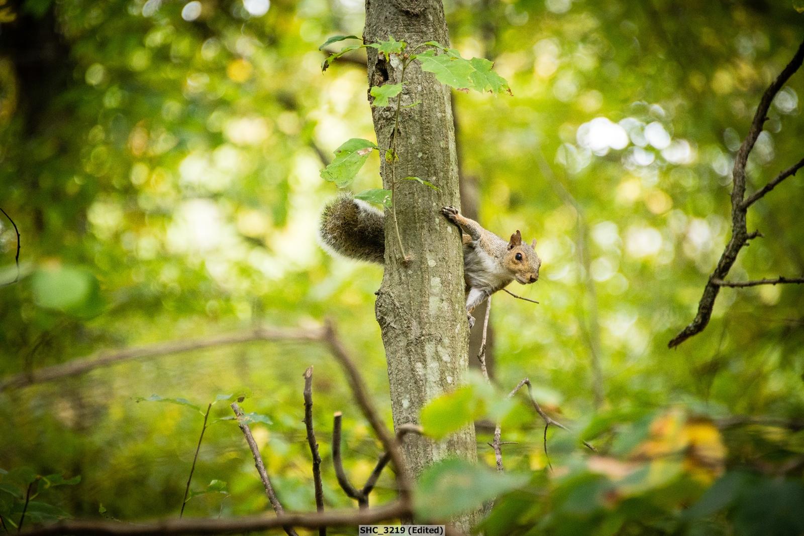 Squirrel-002.jpg